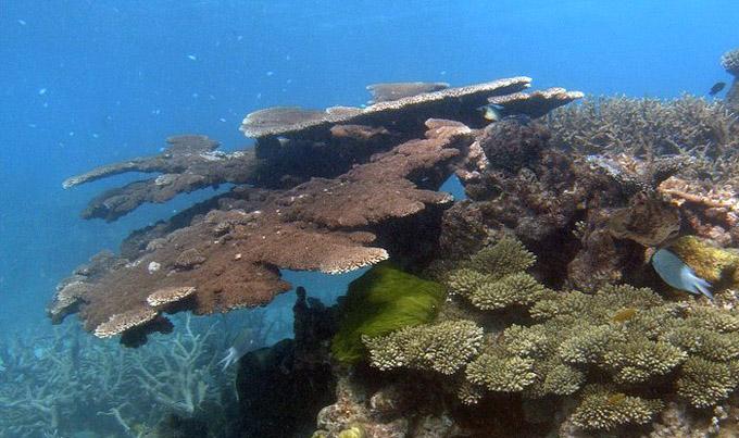 oldest living coral reef
